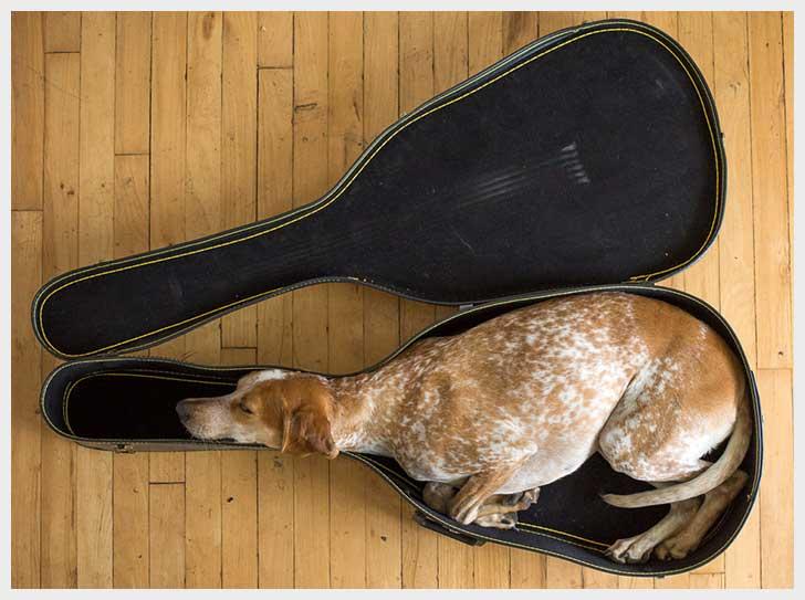 dog-guitar-case-cute.jpg