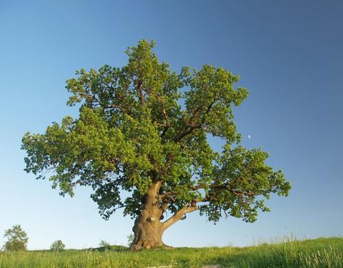 Einsamer-Baum.jpg