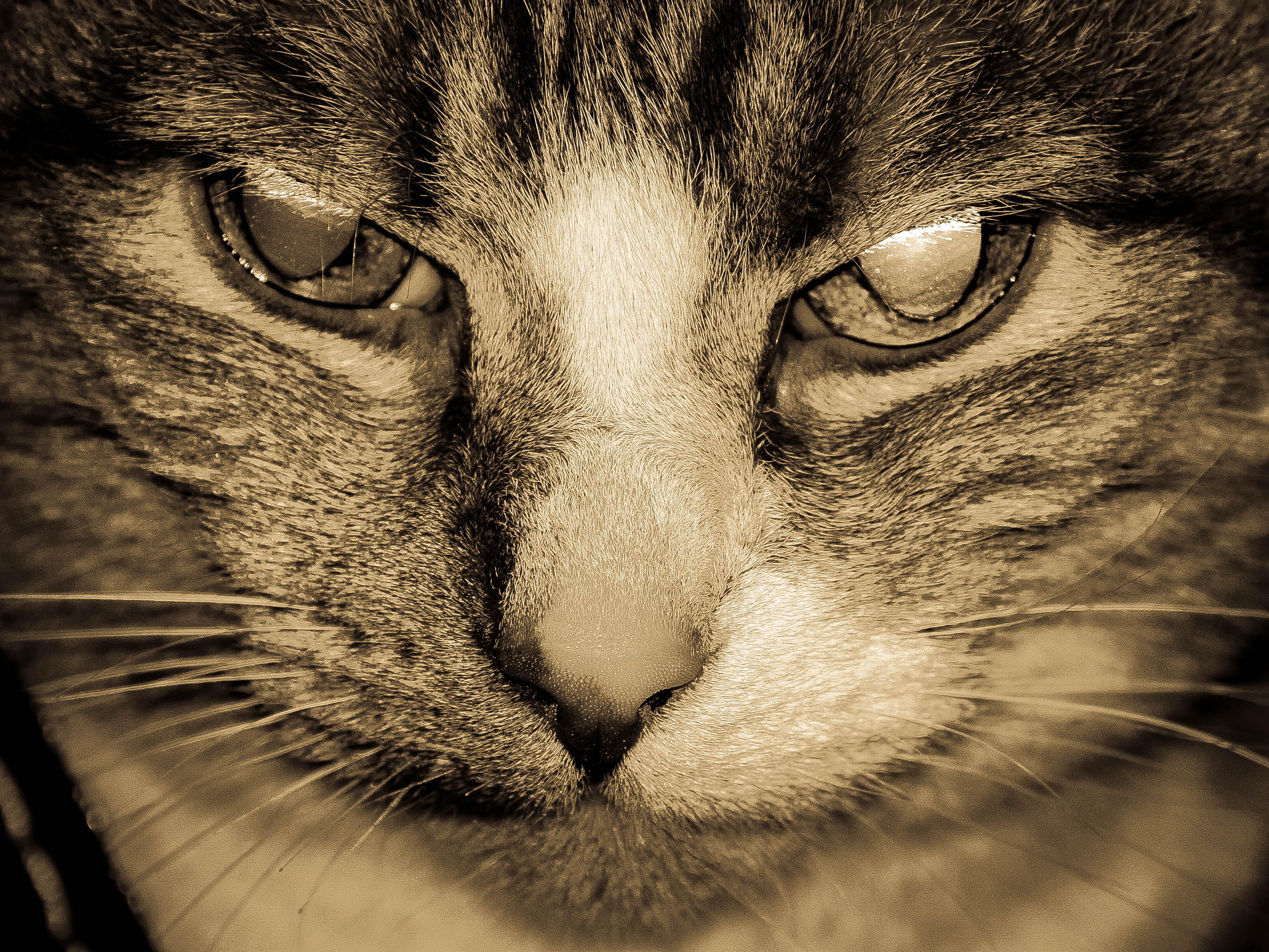KatzeDiabolisch.jpg