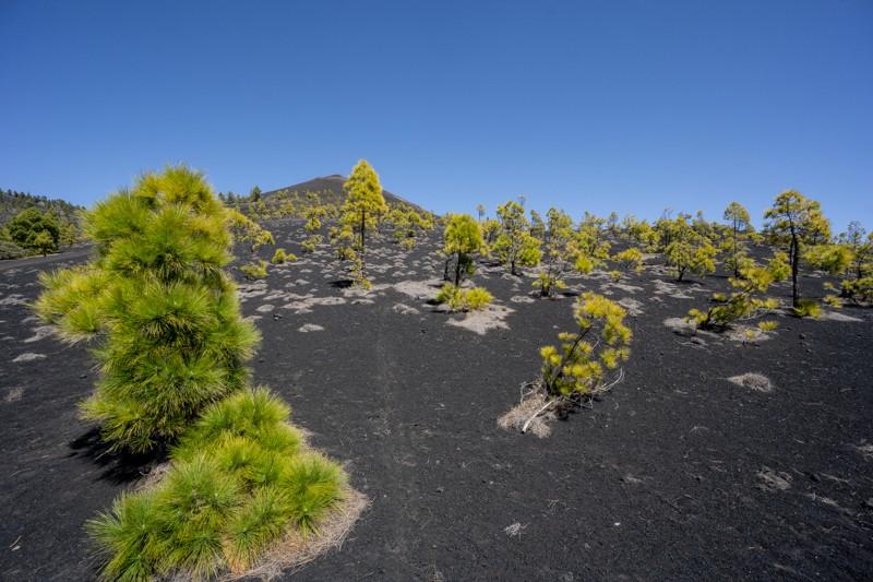 La Palma 2019 435.jpg