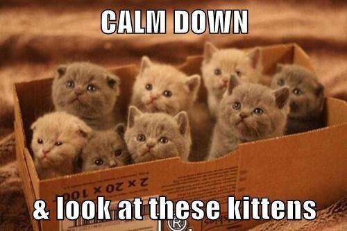 calm-down.jpg